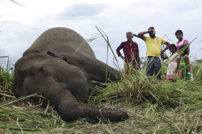 Le cadavre d'un éléphant retrouvé par des villageois de Sigiriya, à 177km au nord de Colombo, la capitale sri-lankaise, le 27septembre 2019.