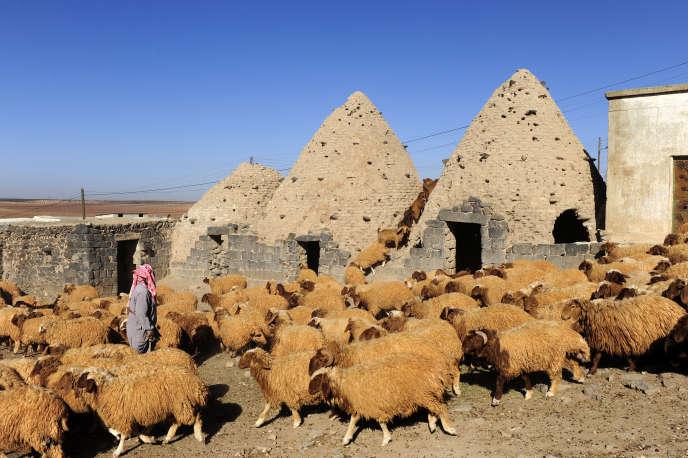Syrie,environs d'Hama,les maisons ruches,au premier plan troupeau de moutons