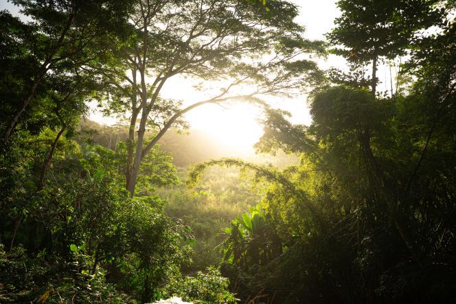Dans l'Ebony Forest.