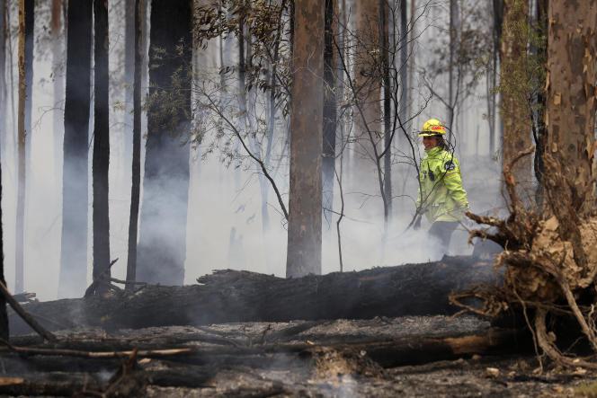 Un feu contrôlé destiné à contenir les incendies, le 12janvier, près deBodalla (Australie).