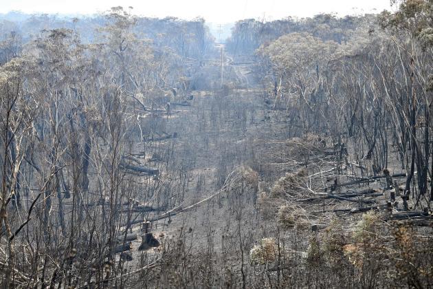 La végétation décimée au mont Wilson, à 30 kilomètres de Blackheath, dans les montagnes Bleues, le 18 décembre.