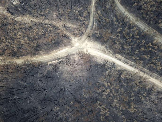 Près du village de Nerrigundah (Nouvelle-Galles du Sud), en Australie, le 13 janvier.