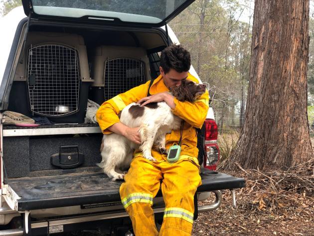 Ryan Tate et son chien Taylor cherchent les koalas blessés, à Taree, en Nouvelle-Galles du Sud, le 19novembre 2019.