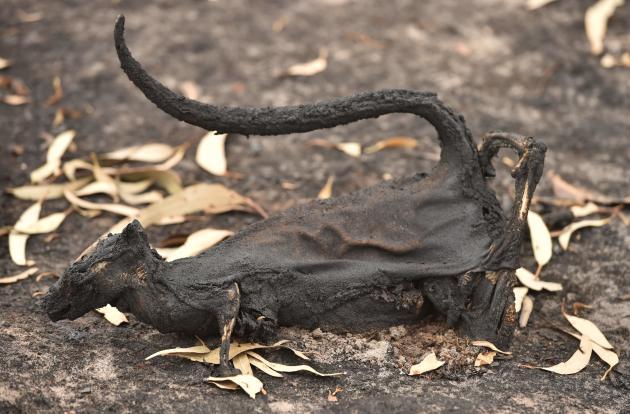 Le sol est jonché de cadavres d'animaux qui ont péri lors des feux.