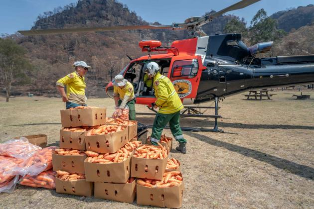 Les rangers du Parc national Wollemi (Nouvelle-Galles du Sud) organisent une action de largage de nourriture, le 10janvier.