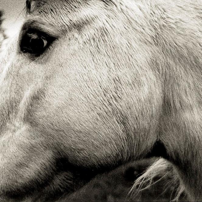Pochette de l'album «Bonny Light Horseman», deBonny Light Horseman.