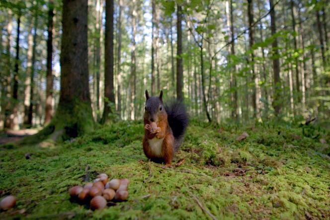 Arte propose quatre-vingts programmes dans le cadre de l'opération«Winter of Forests», jusqu'au samedi 25 janvier 2020.