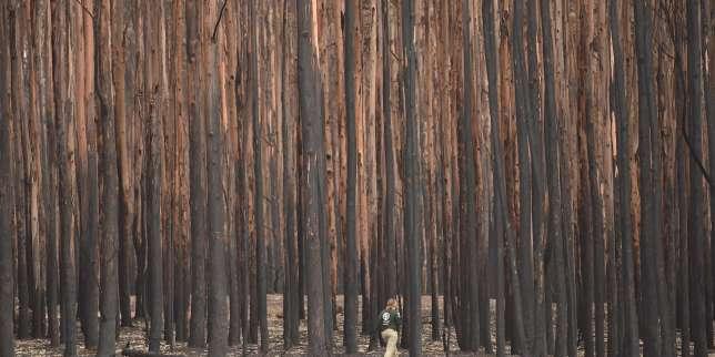 En Australie, les habitats de327espèces menacées touchés par les flammes