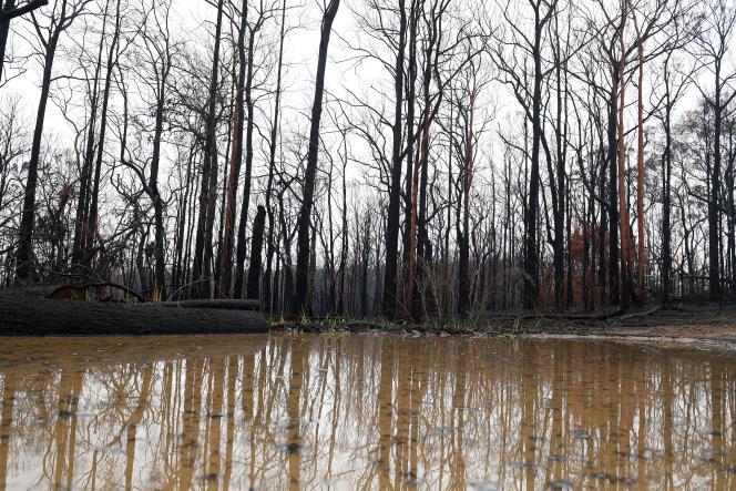 A Bilpin, près de Sydney, dans l'est de l'Australie, les orages ont éteint les incendies, le 17janvier2019.