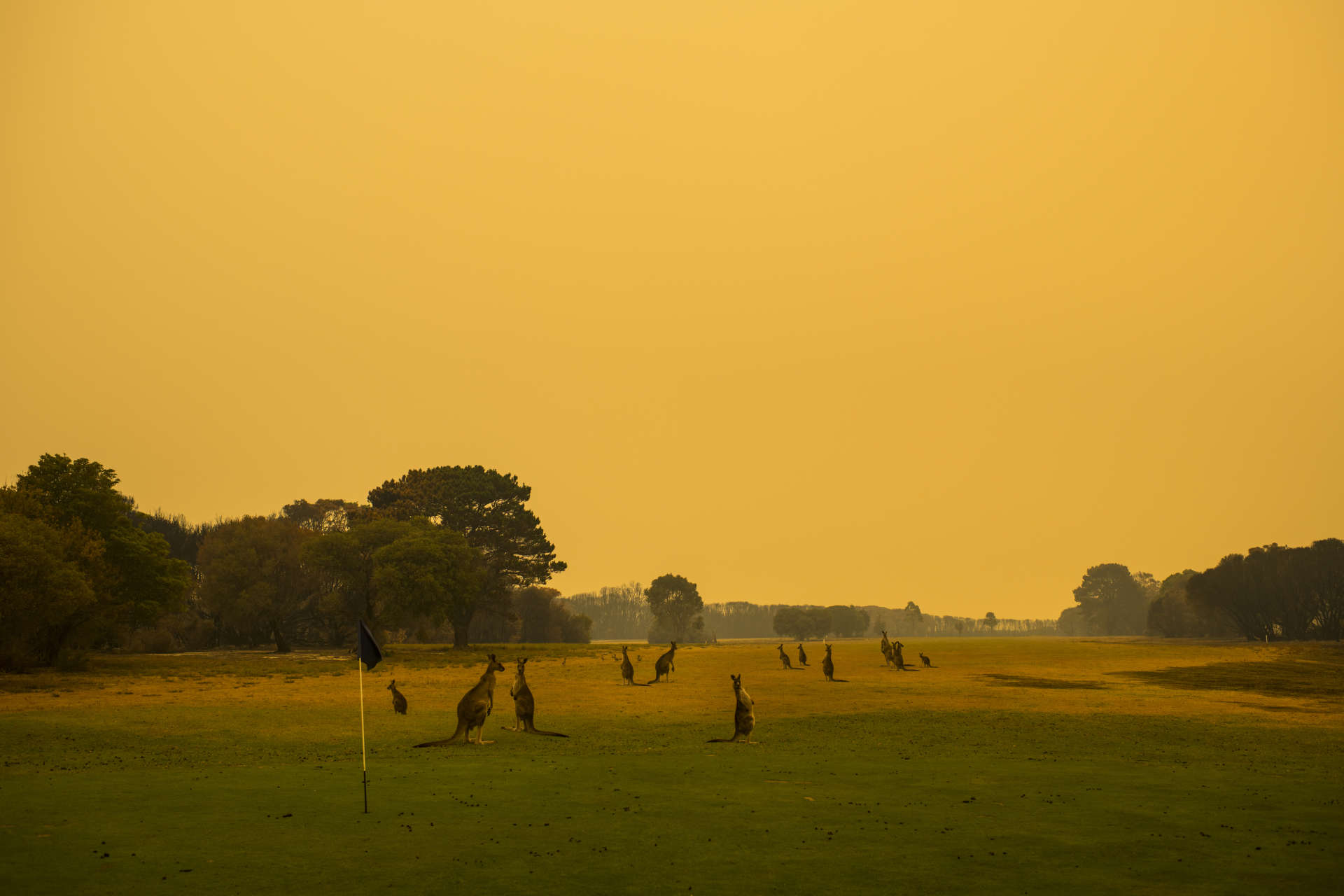 Au golf de Mallacoota (Etat de Victoria), le 13 janvier.