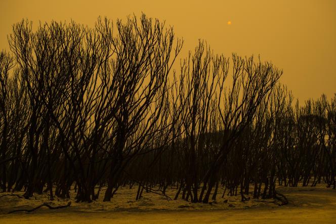 En allant vers la plage Tip Beach à Mallacoota, dans le nord-est de l'état de Victoria, deux semaines après un incendie ravageur.