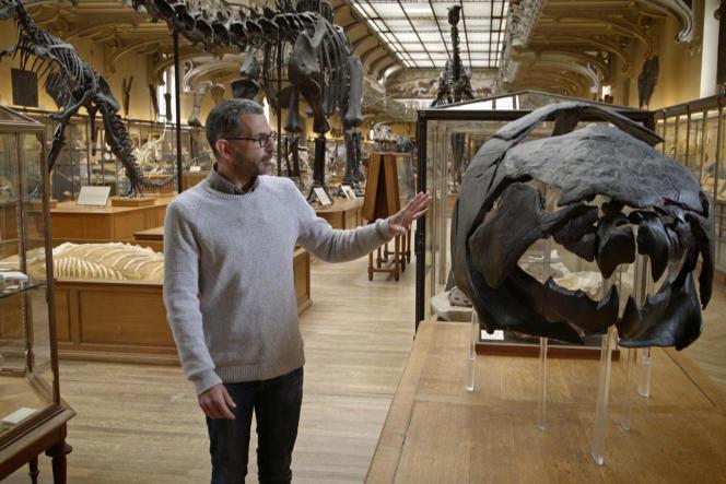 Un passage au Muséum national d'histoire naturelle de Paris permet d'illustrer la théorie, grâce à Gaël Clément, paléontologue.