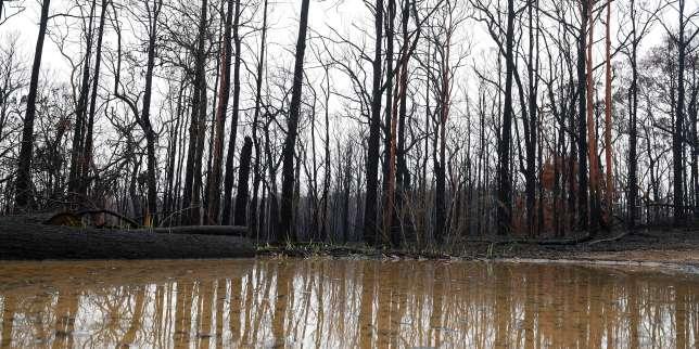 Australie: à l'est, les orages éteignent enfin des incendies