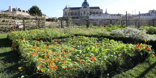 «Restaurons le Potager du roi à Versailles sans mettre en péril ses valeurs historiques et pédagogiques»