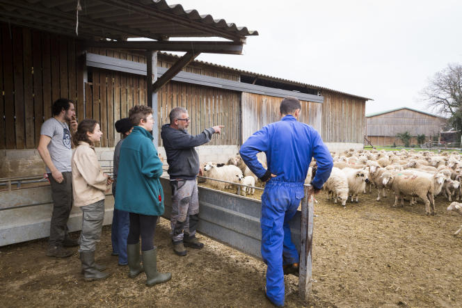La formation « berger transhumant» avec Jean Dominique, chef berger du domaine du Merle, le 17 janvier.