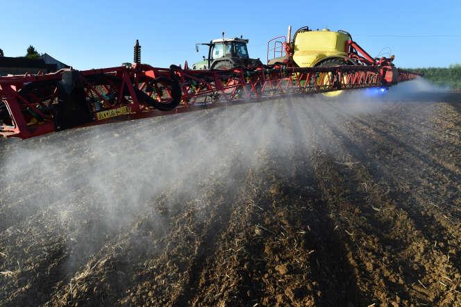 Du glyphosate est pulvérisé, dans un champ de maïs, dans le nord-ouest de la France, 11 mai 2018.