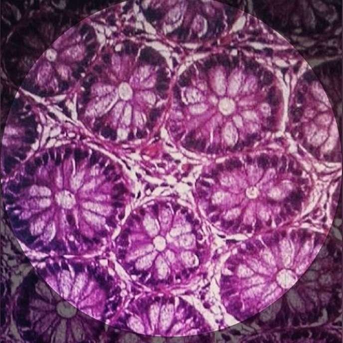 Cellules intestinales provenant d'un côlon humain en bonne santé.