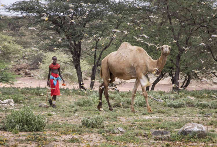 Un berger Samburu, le 16 janvier 2020 près du village de Sissia, au Kenya.