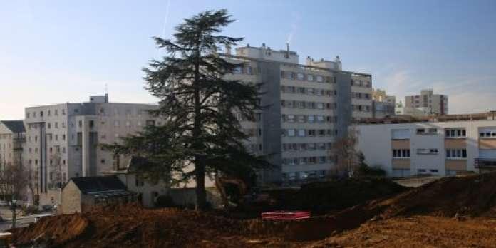 """« Le cèdre du Mans, """"symbole"""" de la façon dont les grands arbres sont mal considérés dans les centres-villes »"""