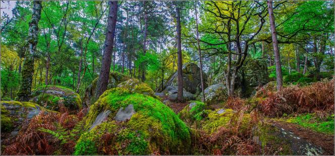 L'office du tourisme propose dix circuits, accompagnés d'un garde forestier ou non.