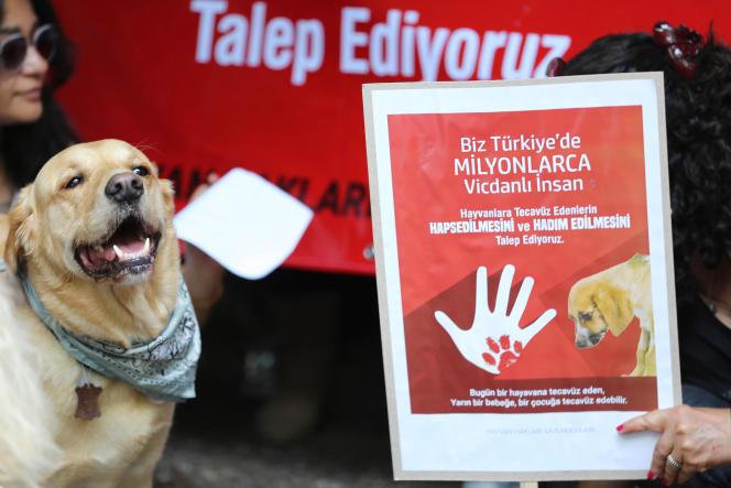 Lors d'une manifestation, à Ankara, pour la pénalisation de la zoophilie, en juin 2018, après la diffusion sur les réseaux sociaux d'une vidéo montrant le viol d'un chien.