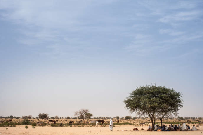 Des fermiers se protègent du soleil sous un manguier, dans la région du Ouaddaï, au Tchad, en mars 2019.