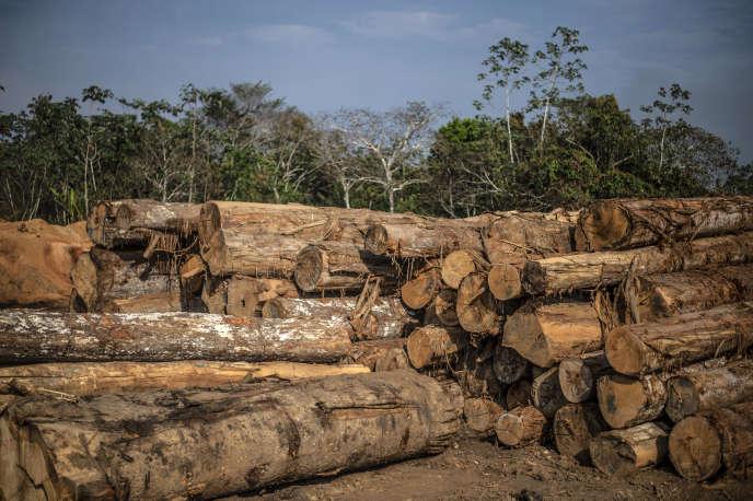 Dans une scierie près de Puerto Maldonado (région de Madre de Dios), dans la forêt amazonienne du sud-est du Pérou, le 3 septembre 2019.