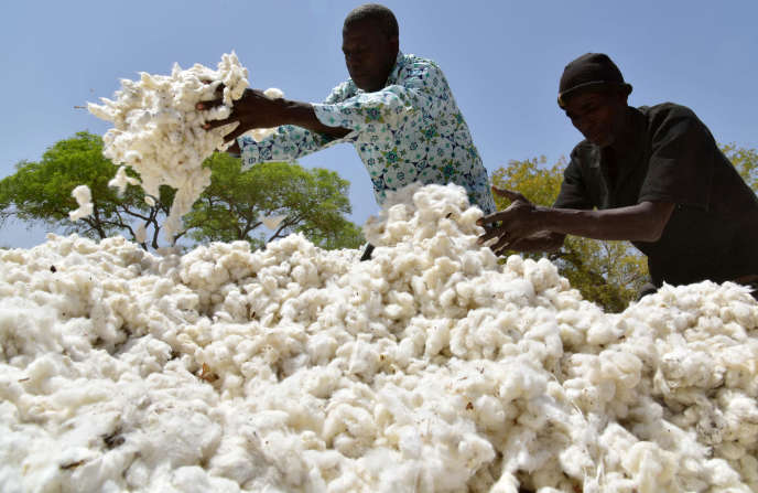 Récolte de coton à Boromo, au Burkina Faso, en mars 2017.