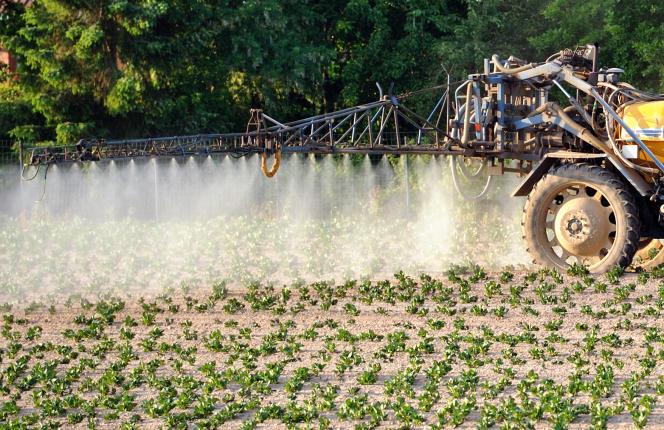 Epandage de pesticides dans un champ de pommes de terre, le 30 mai 2012 à Godewaersvelde (Nord).