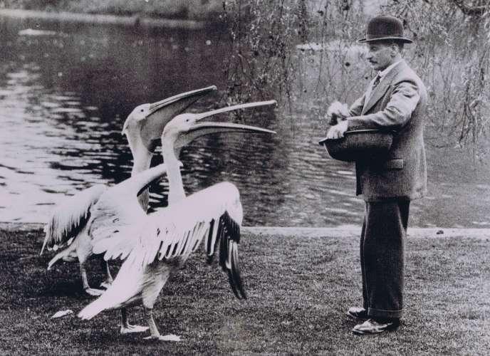 Un homme nourrissant des pélicans dans un parc londonien.