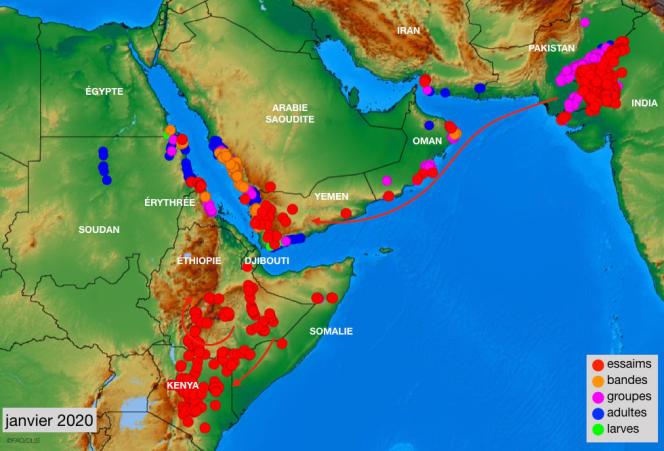 Carte de répartition des criquets pèlerins sur la péninsule arabique et dans la Corne de l'Afrique, en janvier 2020.