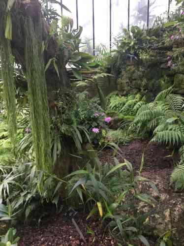 L'exposition« Orchids», présentée à Kew jusqu'au 9 mars 2020, met à l'honneur l'Indonésie et la luxuriante végétation de ses milliersd'îles, avec leur grande biodiversité et leurs 5000espèces d'orchidées répertoriées.
