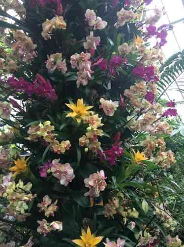 Ces assemblages colorés d'orchidées sont très appréciés des visiteurs londoniens.