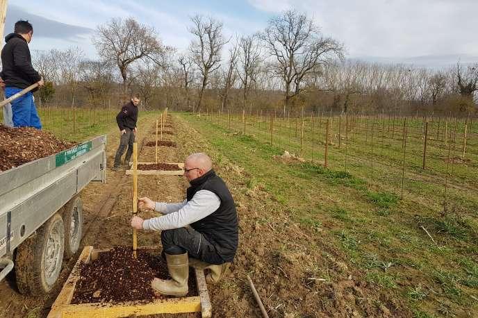 Le vignoble expérimental appelé «New Age» s'étend sur 17 hectares.