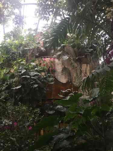 Les orchidées sont un contrepoint coloré à l'atmosphère végétale et poétique du lieu, «exploré» en son temps par le Douanier Rousseau.