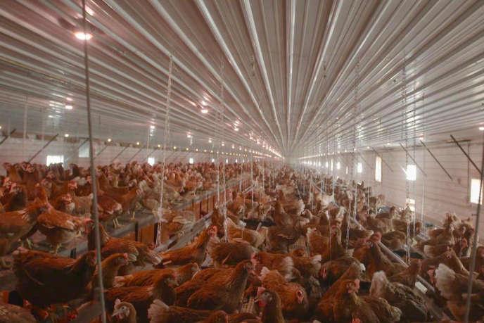 Le documentaire de Benoît Bringer met en lumière les sérieux problèmes de consommation et d'environnement posés parl'agriculture intensive.