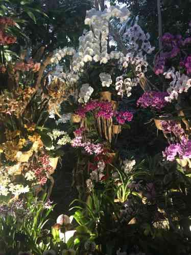 Les partenaires du Jardin des plantes et de l'Arboretum de Versailles-Chèvreloup pour cette exposition sont le Jardin botanique de Paris - Serres d'Auteuil, des associations et des producteurs, qui présentent sous une tente attenante aux serres leurs activités et leur production.