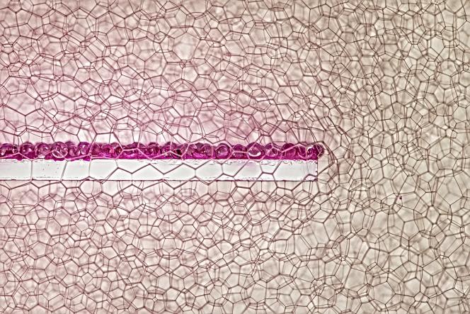 Une lame de 2 centimètres de large couverte de microbilles de verre, dans des mousses de savon aux bulles bien contrôlées.