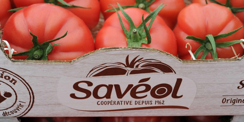 Savéol touchée par le virus de la tomate