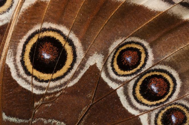 Gros plan sur une aile de papillon.