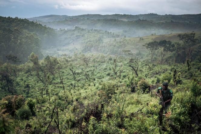 Une partie déboisée du parc de Kahuzi-Biega, dans l'est de la République démocratique du Congo, en septembre 2019.