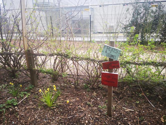 Comm'un Jardin, au sein du square Rosa-Luxemburg, géré par l'association Vergers Urbains, est ouvert au public.