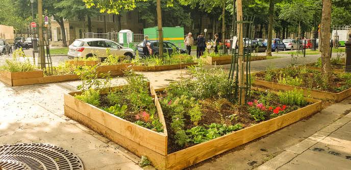 Ces dernières années, les habitants– comme ici avenue de l'Observatoire, à Paris– ont joué un rôle actif dans la végétalisation de l'espace public.
