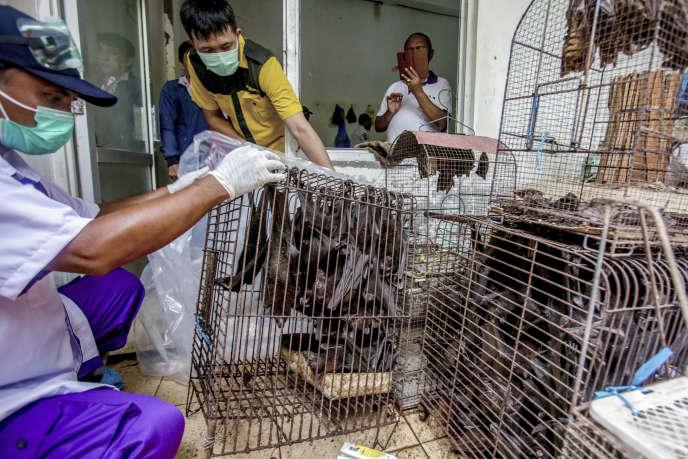 Des officiers sanitaires inspectent des chauves-souris confisquées et sur le point d'être abattues, à Solo (Indonésie), le 14 mars.