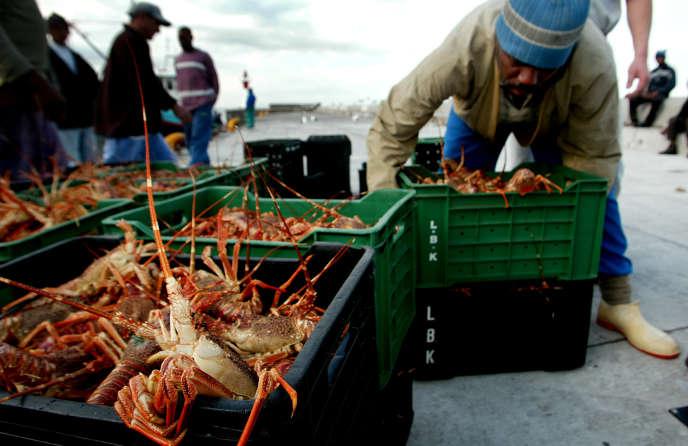 Un pêcheur au port de Kalk Bay, au Cap, en 2003. Les ventes de homards sud-africains, très dépendantes de la demande chinoise, ont été les premières affectées par l'épidémie de coronavirus.