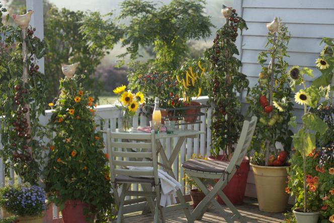 Balcon fleuri et avec des tomates.