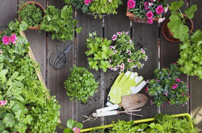 Quatre Bons Plants Pour Jardiner Au Balcon
