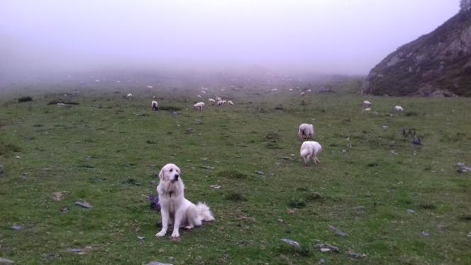 Pendant la transhumance, Alain Domini partage ses journées au milieu de ses brebis, ses chiens et les montagnes.