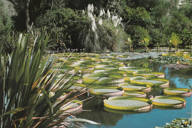 Le lac du jardin botanique de la villa Les Cèdres, avec ses spectaculaires nénuphars géants (« Victoria cruziana»).