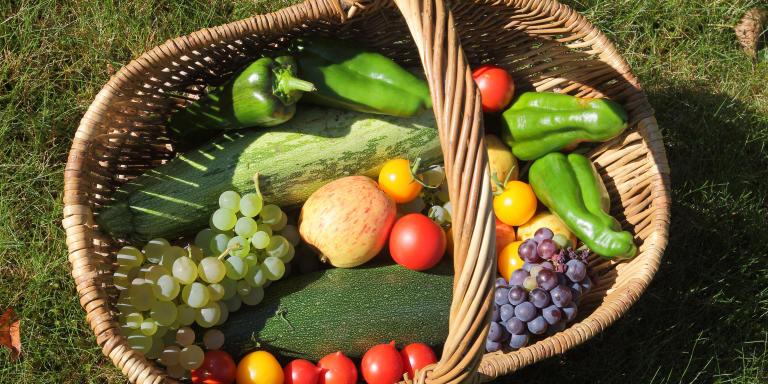Panier bio avec Courgettes, Poivrons, Tomates, Raisins et Pommes dans un jardin familial, Bretagne, France